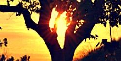 663 Boom zonsondergang kleurrijk 1920 Fotos voor Therapeuten 1560x878resized2